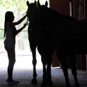 Ragazza e cavalli